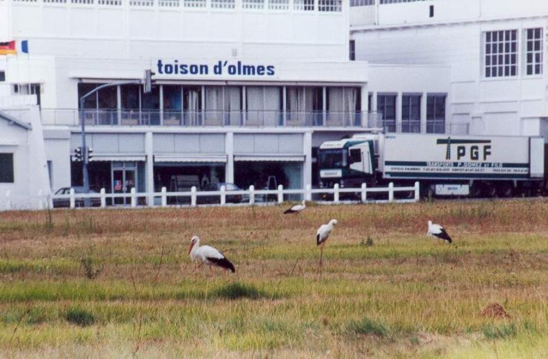 LAROQUE - Cigognes en 1998
