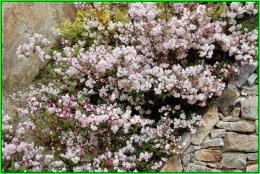 Un beau bouquet pour nos amies bretonnes